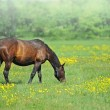 Horse with a baby on a pasture - Stock Photo