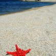 Red sea star on beach — Stok fotoğraf