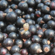 Stock Photo: Snail crawling on berries ripe currants