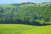 Hill countryside in Tuscany — Stock Photo