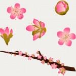Peach Blossoms — Stock Vector