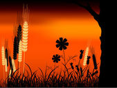 Sunset and Wheat — Stock Vector