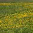 Стоковое фото: Flowery meadow in Val Gardena