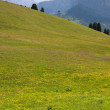 图库照片: Meadow in Val Gardena
