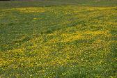 Flowery meadow in Val Gardena — Stock Photo