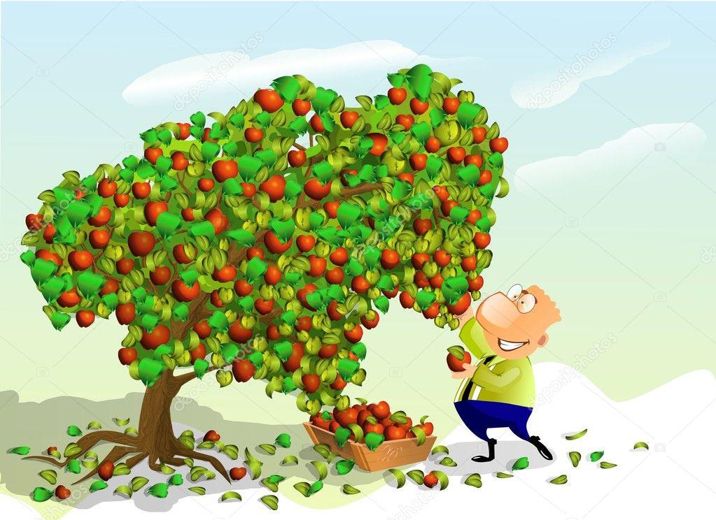 Man picking apples. — Stock Photo © Regisser_com #6216141