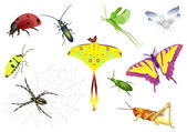 Set of bugs — Stock Vector