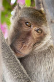 Hua Hin Monkey 04 — Stock Photo