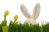 Tulips and easter bunny — Stock Photo