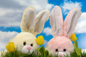 Easter bunnies and tulips — Stock Photo