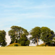 Trees on hills — Foto Stock