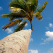 Royalty-Free Stock Photo: Palm at exotic beach in caribbean