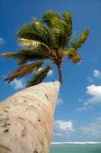 Dlaň na exotické pláži v karibiku — Stock fotografie