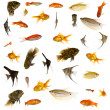 Fish collection. 5000 x 5000 pixels. - Stock Photo