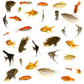 Fish collection. 5000 x 5000 pixels. — Stock Photo