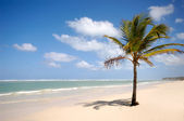 Caribbean beach with palm and white sand — Stock Photo