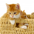 Two kittens in basket — Foto de Stock