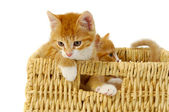 Two kittens in basket — Stock Photo