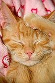 困甜小猫 — 图库照片
