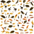 Royalty-Free Stock Photo: Fish collection. 5000 x 5000 pixels.