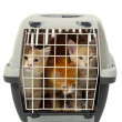 Stock Photo: Kittens in transport box isolated on white background