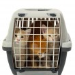 Kittens in transport box isolated on white background — Stock Photo #5969902
