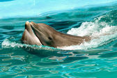 Dolphin couple in love — Stock Photo
