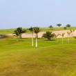 Palms on golf course — Stock Photo #6269446