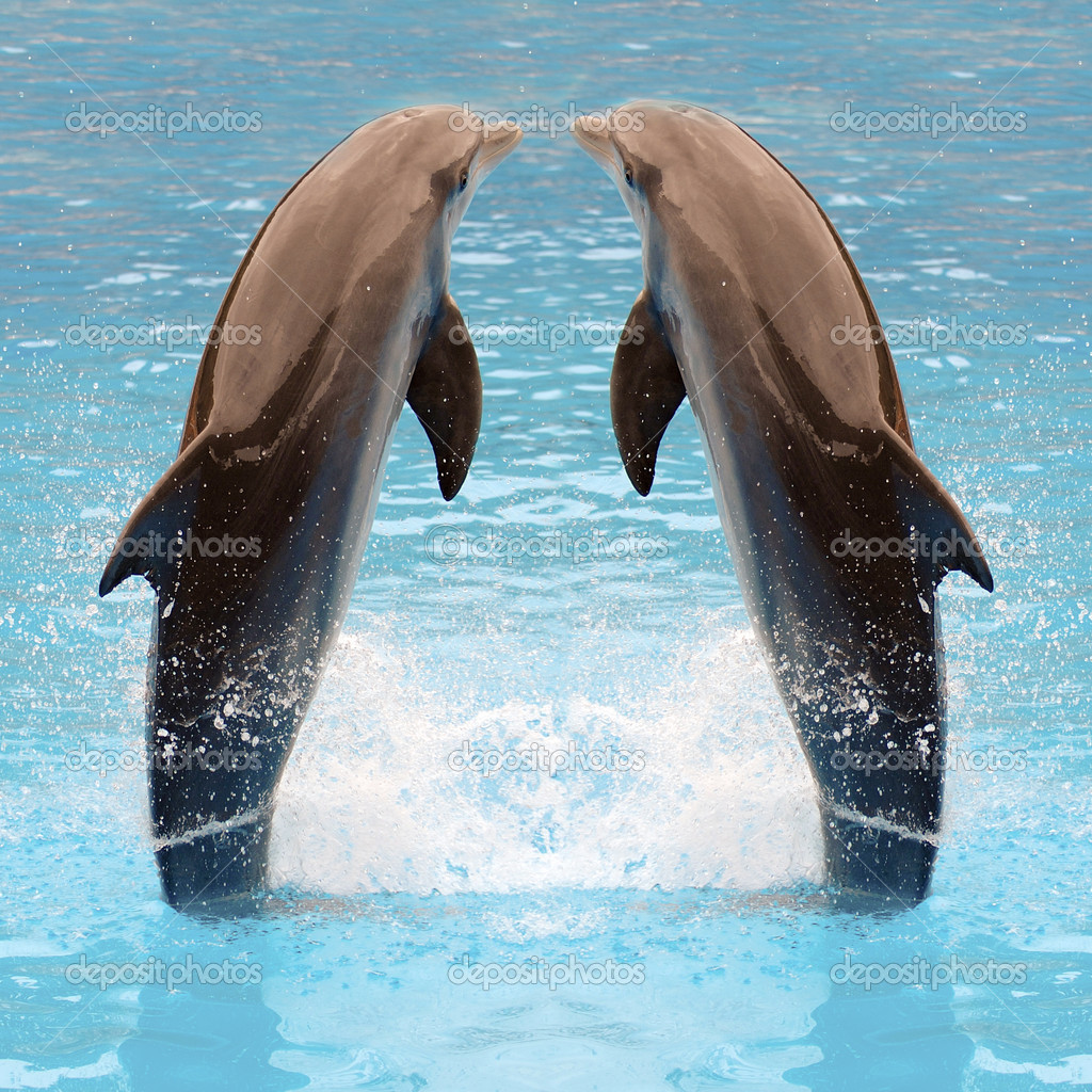 Dolphin twins are jumping in the water. — Stock Photo #6269318