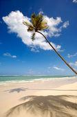 Egzotik plajda palmiye — Stok fotoğraf