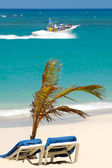 Sun lounger and palm on beach — Stock Photo