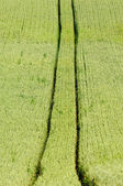Track and corn — Stock Photo