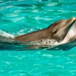 Dolphin couple in love — Stock Photo #6483945