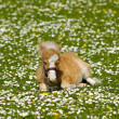 Horse foal on flower meadow — Stock Photo