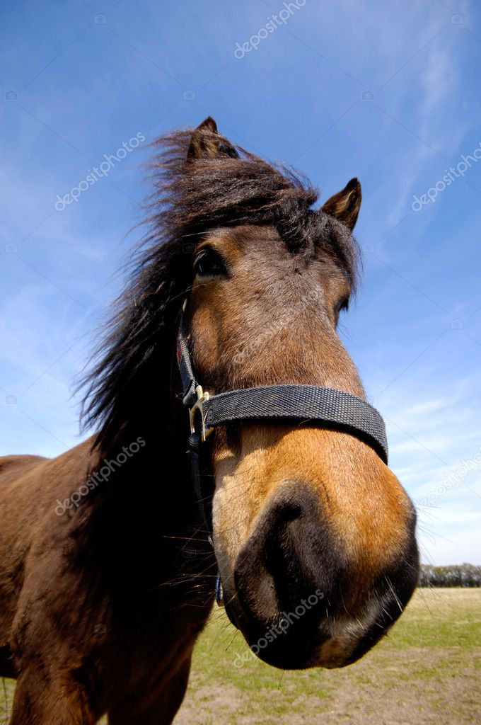 Wide angle shot of horse face. The horse is looking interested. — Stock Photo #6483996