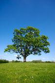 árvore, verde relva e azul céu — Fotografia Stock