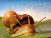 Two funny snails — Stock Photo