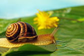 Snail on a meadow — Stock Photo