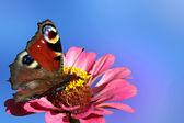 坐在花上的蝴蝶 — 图库照片