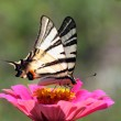 Butterfly Sitting On Flower — Stock Photo #6355067