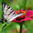 Butterfly — Stock Photo #6685572