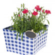 Stock Photo: Pinking shears in flower pot