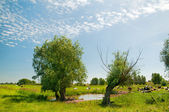 Typical Dutch landscape — Stock Photo