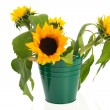 Bouquet sunflowers in green bucket — Stock Photo