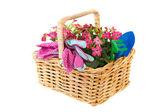 Basket flowers for gardening — Stock Photo