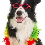Dog on vacation — Stock Photo #5907340