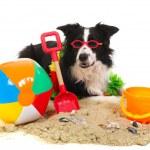 Dog on vacation — Stock Photo #5907342