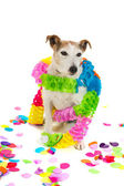 Birthday dog — Stock fotografie
