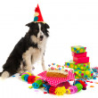 Birthday dog — Stock Photo #5931226