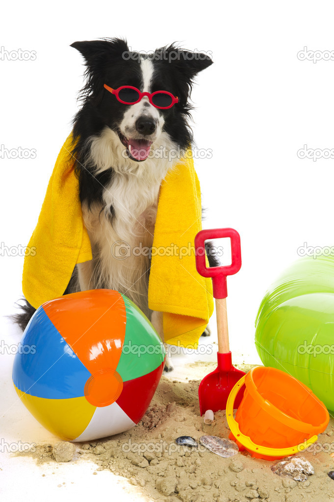 Portrait of a dog on vacation with garland and sunglasses — Stock Photo #6013477